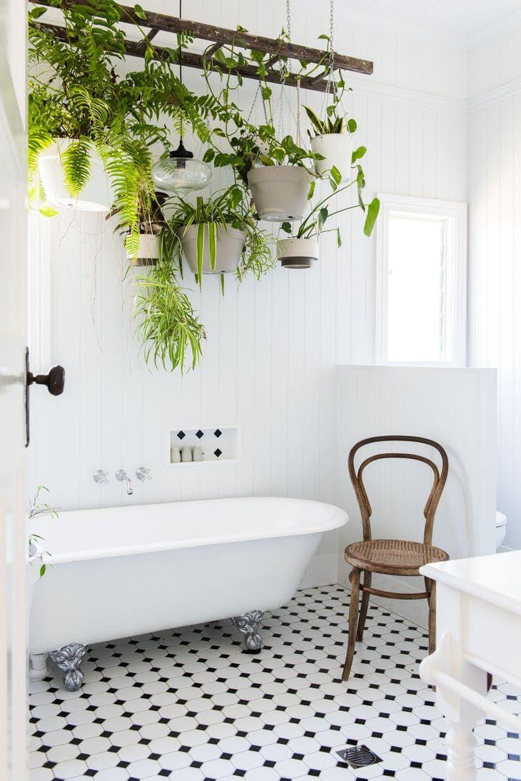 Variedad de plantas en macetas colgantes sobre la bañera.