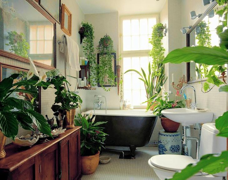 Cuarto de baño con gran variedad de plantas de interior