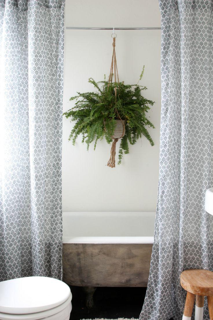 Los helechos son ideales para baños ya que requieren climas húmedos y poca luz