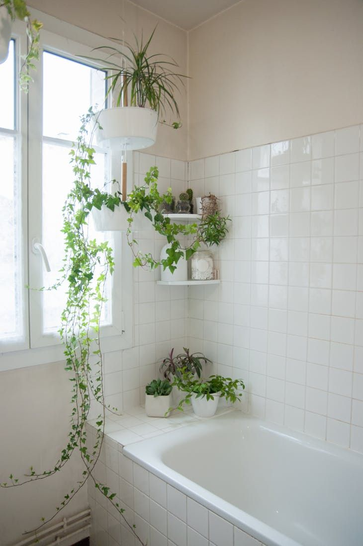En el baño puedes poner plantas colgantes con hiedras para decorar sin ocupar mucho espacio.