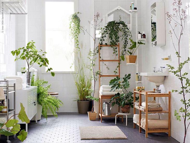 Plantas en el baño - Ideas para decorar baños con 5 plantas de poco mantenimiento