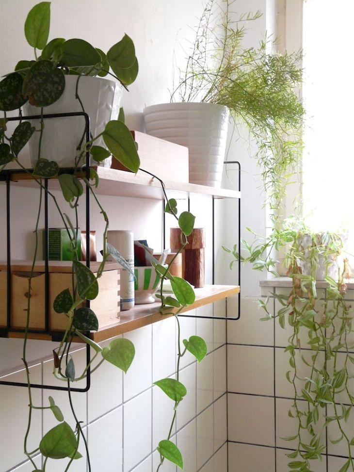 Plantas en el ba o ideas para decorar ba os con plantas depto9 - Plantas en el bano ...