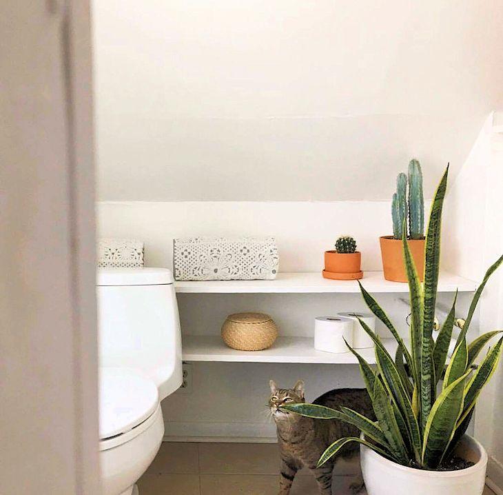 Sansevieria en el baño: una planta versátil que se adapta a todos los ambientes del hogar.