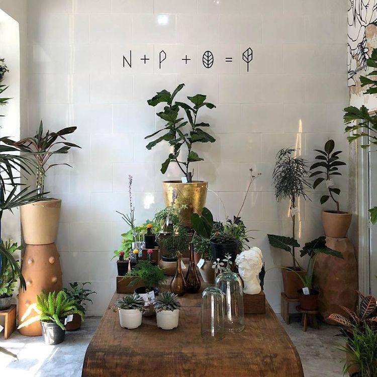 Noble Planta - Tienda de plantas en Guadalajara 1