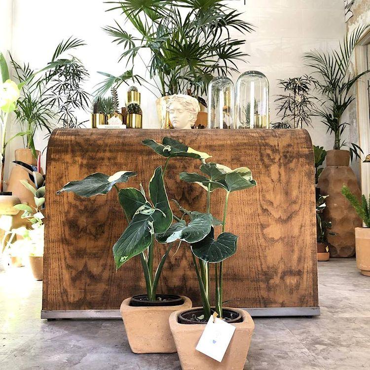 Noble Planta - Tienda de plantas en Guadalajara 2