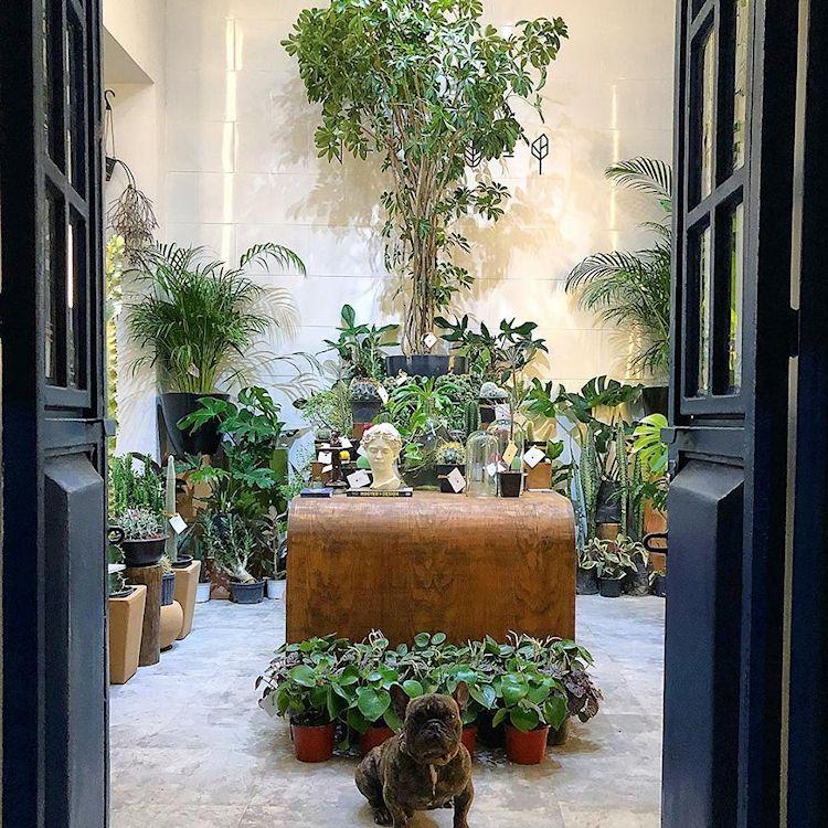 Noble Planta - Tienda de plantas en Guadalajara 3