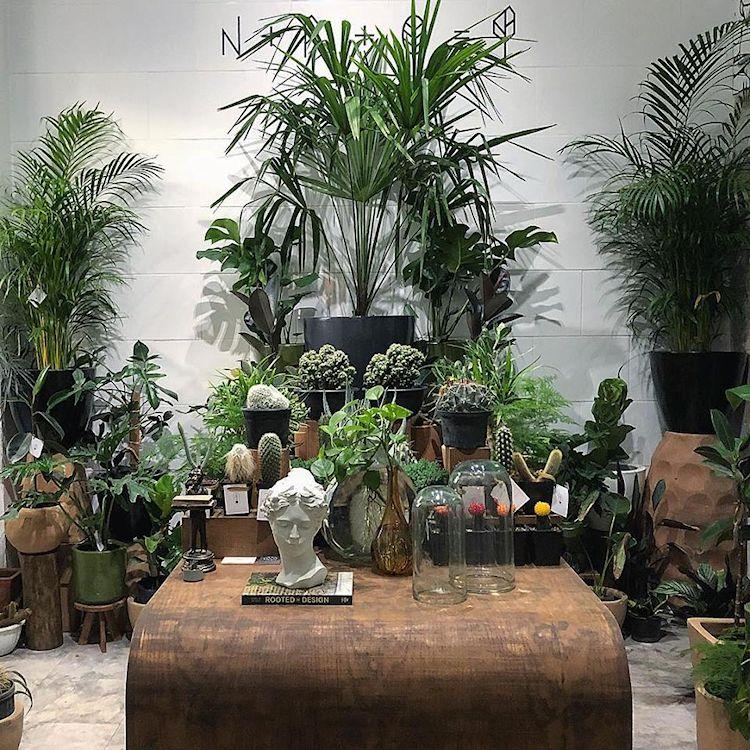 Noble Planta - Tienda de plantas en Guadalajara 4
