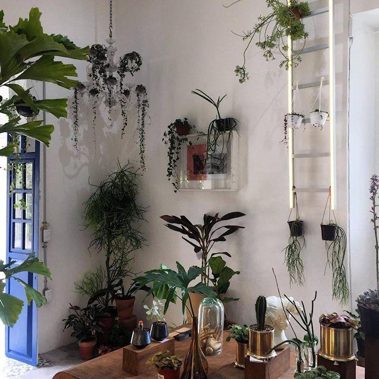 Noble Planta - Tienda de plantas en Guadalajara 5