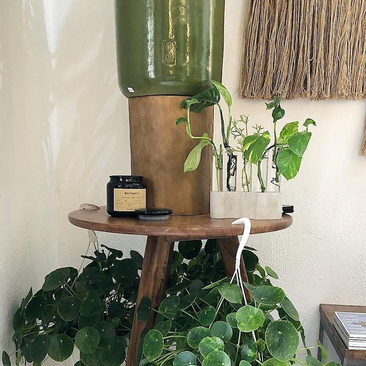 Noble Planta - Tienda de plantas en Guadalajara 6
